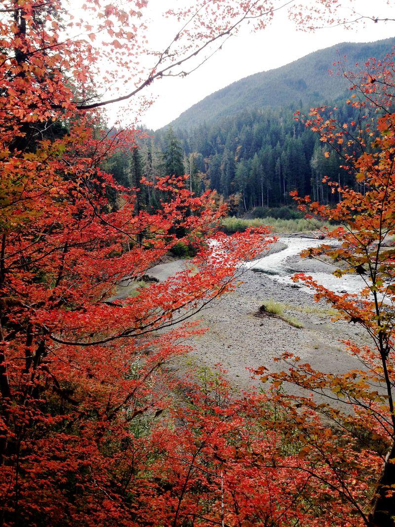 Elwha River Trail